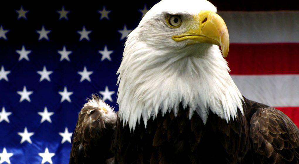daily-viper-america-eagle